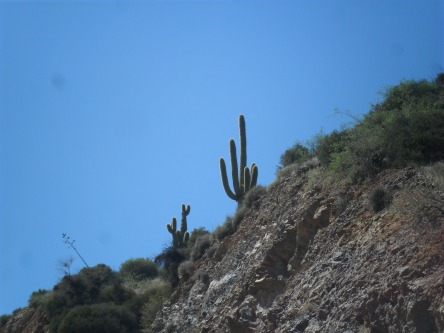 My first Saguaro Cactus